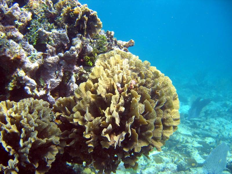 Goff's Caye Snorkeling