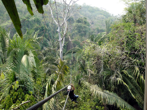 Zip line in the Belize jungle canopy