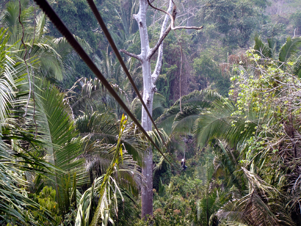 Belize rain forest zip line