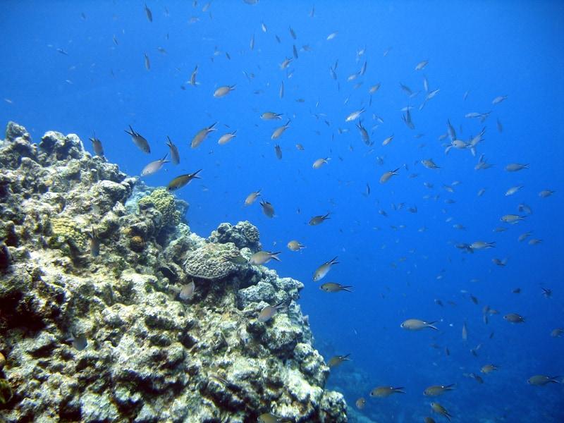 Snorkeling Goff's Caye Belize
